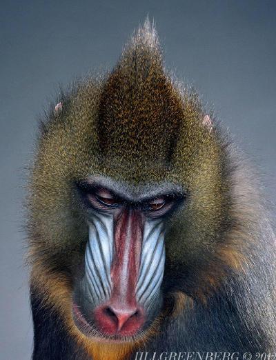 aap schilderij nageschilderd van foto