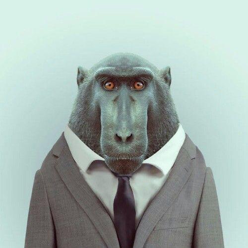 Sanne – schilderij aap in pak