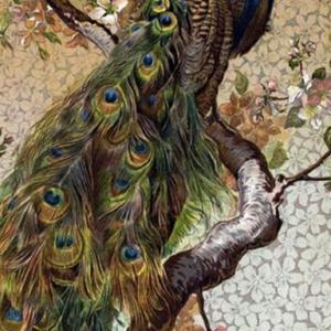 Janneke – tweeluik pauwen